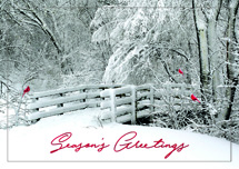 Fresh Air Holiday Cards